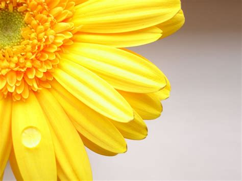 Yellow Flowers Wallpapers Hd Pictures  One Hd Wallpaper