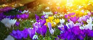 Blumen Im Frühling : blumen im fr hling und zu ostern im flachgau g rtnerei frahammer tannham ~ Orissabook.com Haus und Dekorationen