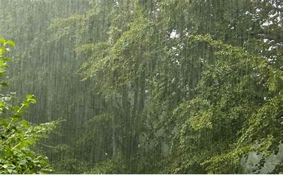 Much Rainfall Showers Bring Rain Weather Thunderstorms