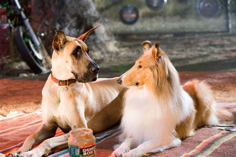 marmaduke pictures film review marmaduke fan the fire