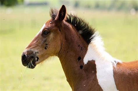horse born baby hair looks twin tha