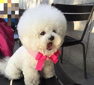 It Looks Like A Giant, Fluffy Cotton Ball But Watch When She Starts To Move
