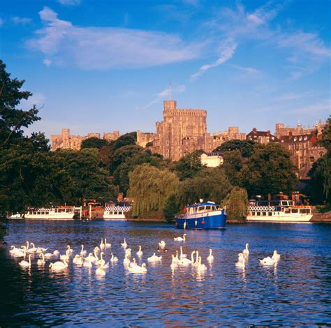 queen elizabeths swans  killed  barbecued