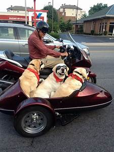 Dogs Ride Sidecar On Nashville Man's Motorcycle (PHOTO ...