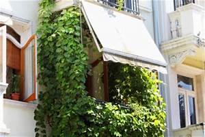 Was Kann Man Auf Dem Balkon Verlegen : weinrebe auf dem balkon wertvolle tipps zu anbau pflege ~ Bigdaddyawards.com Haus und Dekorationen