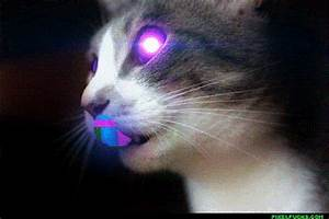 Neon Cats GIFs Find & on GIPHY