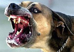 Rabies – another threat from the north - Health & Sci-Tech ...