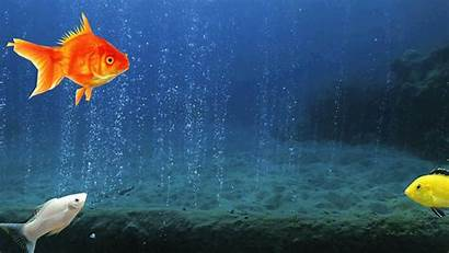 Fish Backgrounds Move Animation Chillax Arts Wallpapers