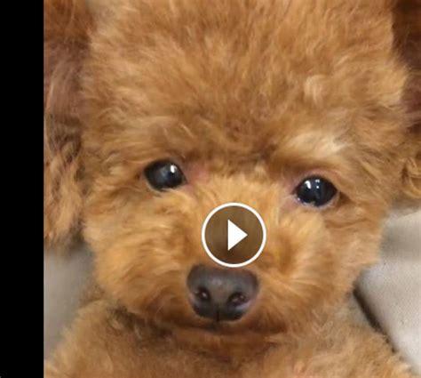 jeux de coiffure et de cuisine vidéo craquante ce petit chien est trop mignon femmes d