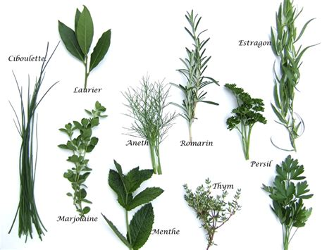 herbes aromatiques produits cuisine fran 231 aise
