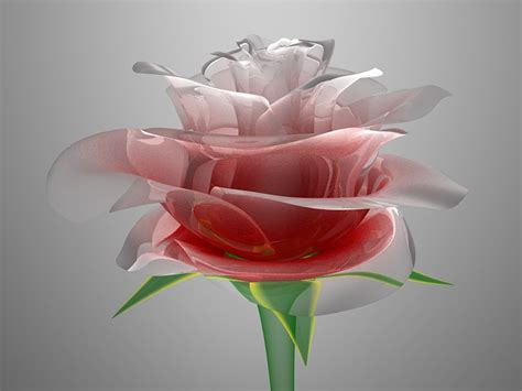 Flower 3d Wallpaper New by 77 New Morning Wallpaper On Wallpapersafari