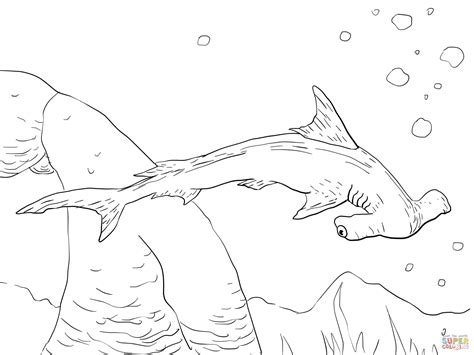 Scalloped Hammerhead Shark Coloring Page