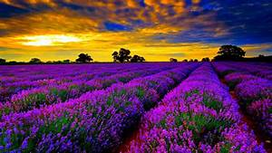 Photo Collection Most Beautiful Desktop Backgrounds