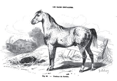 extinct horses friday horse source lists nation