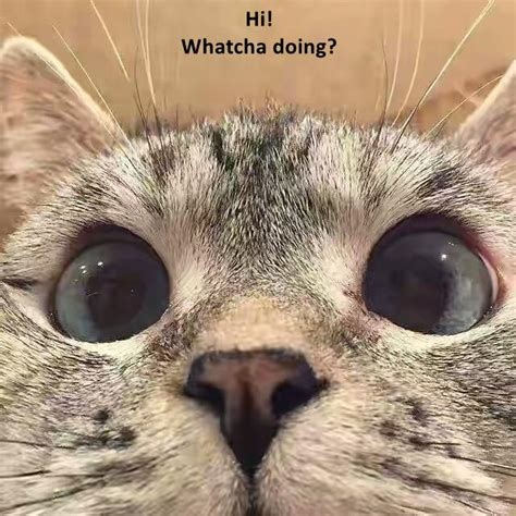 Whatcha Doin Meme Hi Whatcha Doing I Can Has Cheezburger Cats