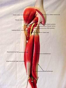 Biol 160  Human Anatomy And Physiology