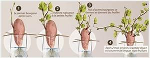 Culture De La Patate Douce : comment cultiver une patate douce ~ Carolinahurricanesstore.com Idées de Décoration