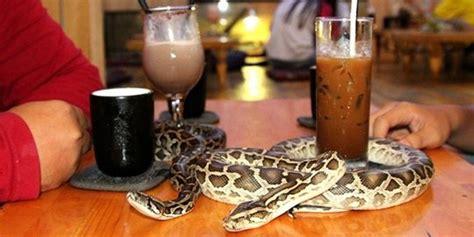 Situs Aborsi Jakarta Di Kafe Ini Pelanggan Disuguhi Segelas Minuman Plus