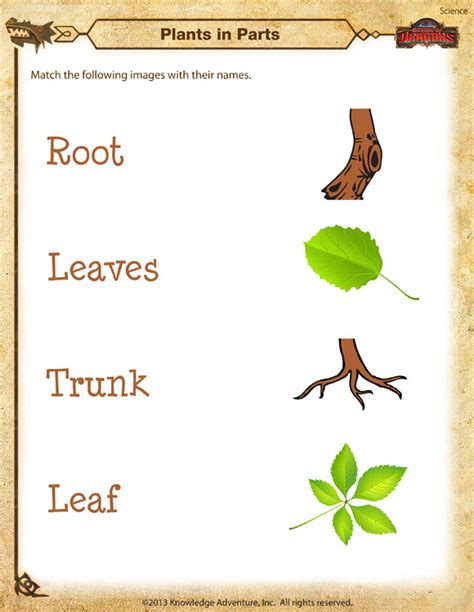 plants  parts worksheet kindergarten science printable