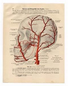 Vintage Illustration Print Medical 1933 Skull Skeleton