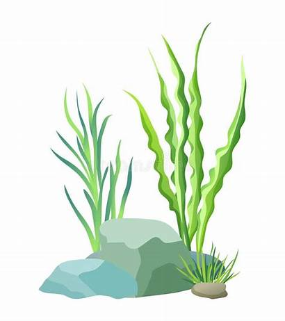 Plants Aquatic Clipart Aquarium Illustrations Illustrazione Vegetation