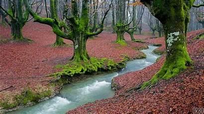 Spain Forest Tonight Autumn Dazn Bellator Whoa