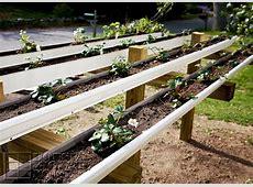 Gardening FAIL Growing Strawberry Plants in Rain Gutters