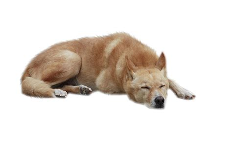 Dog Png Transparent Images Png All