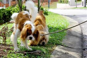 Why does dog pee kill plants and what can we do about it for How to train your dog to pee