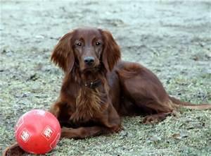 Bodenbelag Für Hunde Geeignet : diese hunde eignen sich f r die wohnungshaltung ~ Lizthompson.info Haus und Dekorationen