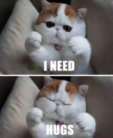 i need a cat 10 cats that really need hugs