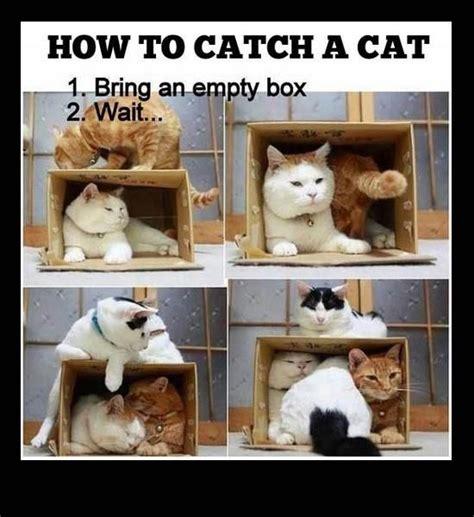 Cat Trap Meme - how to catch a cat empty cat and box