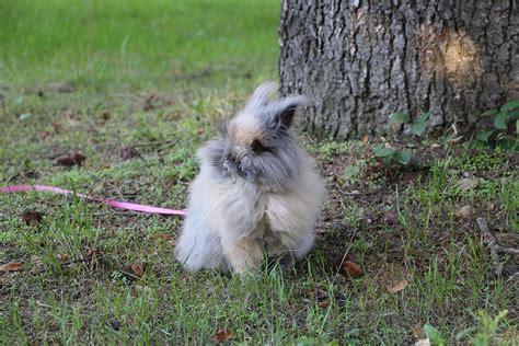 evolution d un lapin nain de ses premiers jours 224 aujourd hui