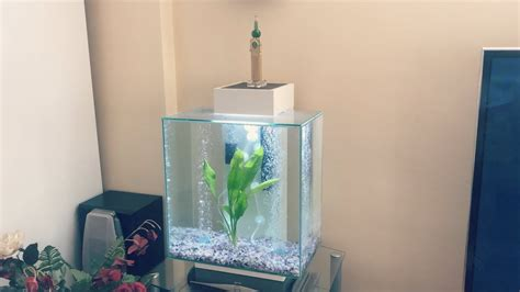 Fluval Edge Aquascape by New Angelfish Clown Loaches Fluval Edge Tank