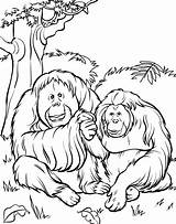 Zoo Coloring Animals Pages Printable Animal Preschoolers sketch template