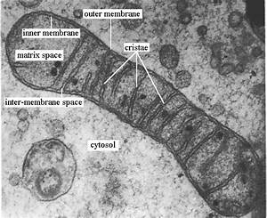 jkinsella921 – HL Biology Period 1