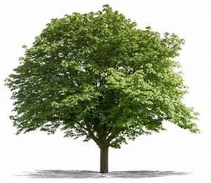 Wann Darf Ich Bäume Fällen : baumpflege springborn f llen fr sen pflanzen ~ Eleganceandgraceweddings.com Haus und Dekorationen
