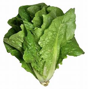 Lettuce Related Keywords & Suggestions - Lettuce Long Tail ...