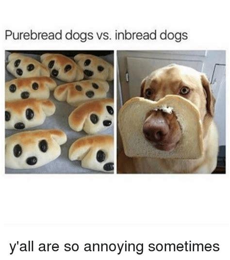 Annoyed Dog Meme - 25 best memes about annoyance annoyance memes