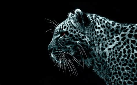 animals leopard   hd wallpapers