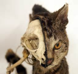cat taxidermy taxidermy conservation s a year in the of a