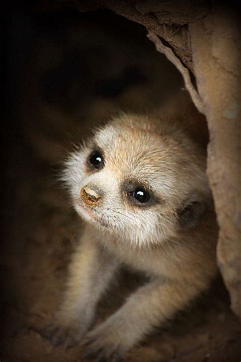 baby exotic animals ideas  pinterest cute