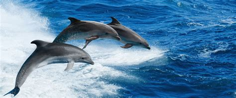 Dolphin Watching - City of Clearwater - Florida Gulf Coast