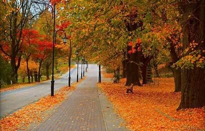 Autumn Fall Park Foliage Road Trees Colors