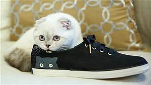 Wait, Taylor Swift's Cat Models Trainers Now?! - Two Big ...
