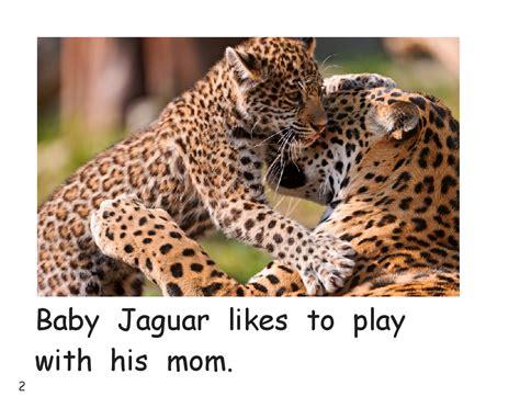 Baby Jaguar Gets A Bath