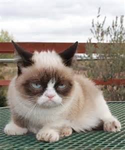 grumpy cat pictures grumpy cat grumpy cat picture
