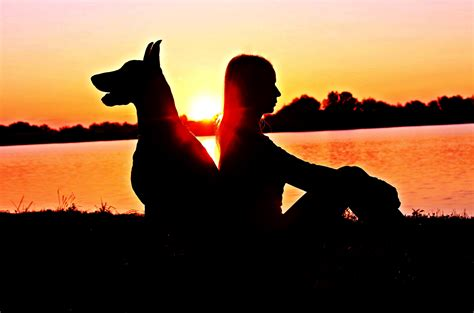 silhouette photo  man  dog  sunset  stock
