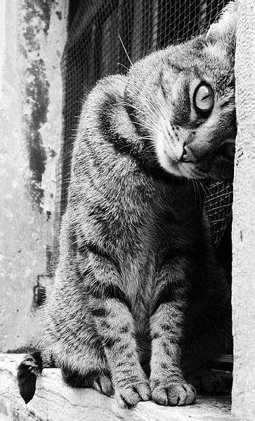 Die Besten 25+ Niedlichen Katzen Ideen Auf Pinterest
