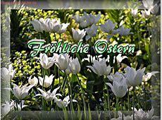 Osterbilder fröhliche Ostern mit weißen Tulpen zum